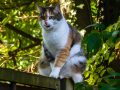 personalised jigsaw puzzle idea cat on fence